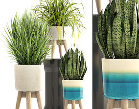 tropic 3D model Collection plants