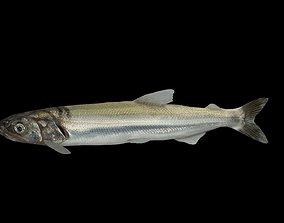 3D model Eulachon aka Candlefish