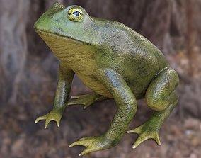 3D model Frog Toad