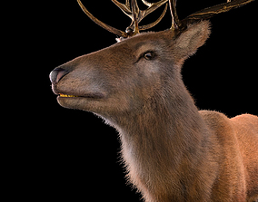Stag Deer Rigged Hairs deer 3D