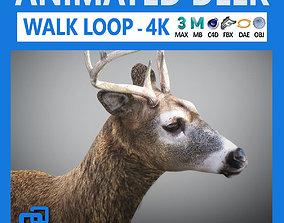 3D Animated Deer