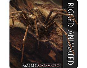 Domestic Spider - Tegenaria Domestica 3D asset