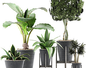 Plants Collection 40 3D model