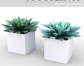 3D Potted Plant - Succulents