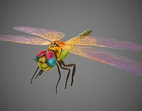 Low poly detailed colorful dragonfly model 3D asset