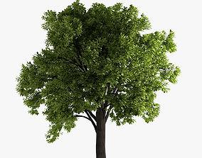 deciduous oak tree 3D model