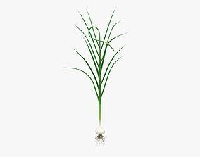 Garlic Plant 3D