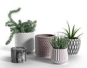 3D model Pots with Donkey s Tail and Aloe Vera