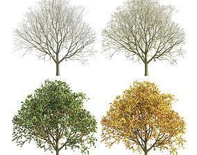 snow 3D Apple Tree 3 Seasons