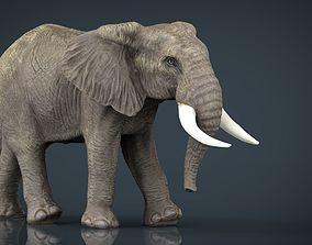 African Elephant 3D asset