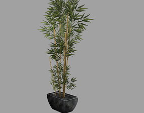 Bamboo Plant in Pot Low Poly 3D asset