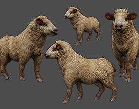 3D asset animated Merino