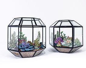 Succulents in terrariums 3D model