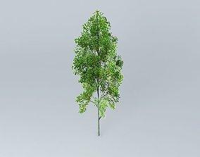 Grey Alder Alnus incana 3D model
