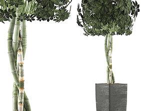 3D Plants Collection 69