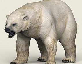 Game Ready Polar Bear 3D asset