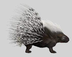 3D Porcupine
