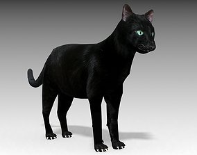 Black Cat Animated 3D asset low-poly