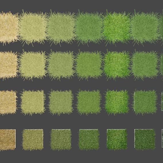 Different Kinds of Grasses