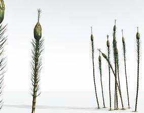 EVERYPlant Suckows Horsetail Tree 12 --16 Models