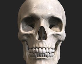 skull 3D model Skull PBR