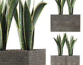 Plants Collection 103 3D