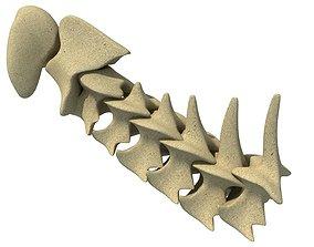 skeletons 3D Animal Vertebrae 1