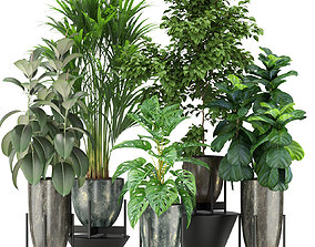 Plants collection 360 3D model