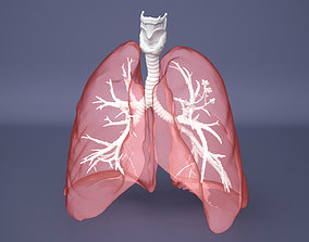 3D Human Lung with Bronchia - Anatomy Respiratory System