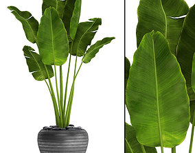 Banana Tree jungle 3D model