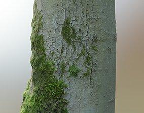 3D asset Mossy Beech Tree Trunk