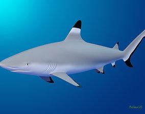 Blacktip Reef shark reef 3D model