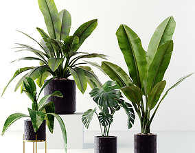 VR / AR ready Collection plants 3D model