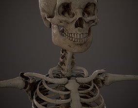 Skeleton kid and adolescents 3D model