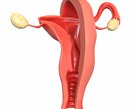 Maps for Female Reproductive System 3D model