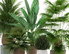 3D Plants collection 125