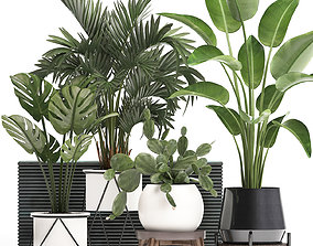 3D model Collection Exotic plants in a pot 448