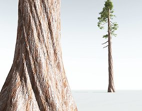 EVERYPlant Coastal Redwood 05 --12 Models-- 3D
