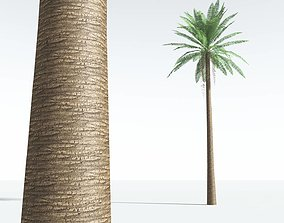 VR / AR ready EVERYPlant Date Palm LowPoly 09 --10