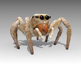 3D model Jumping Spider