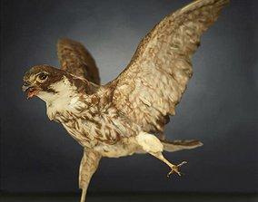 3D model VR / AR ready Bird Photorealistic 1
