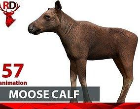 Moose calf 3D asset