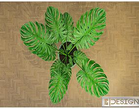3D asset Plant 3d model