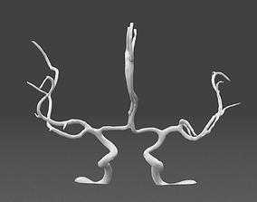 3D Cerebral arteries - male