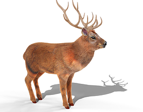 Fur Red stag Deer NO RIG 3D model