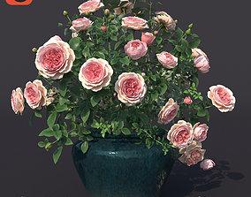 Rose Bush in the pot N1 3D model