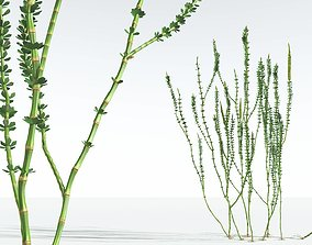 3D EVERYPlant Hollow-Stemmed Sphenophyllum 09 --16Models--