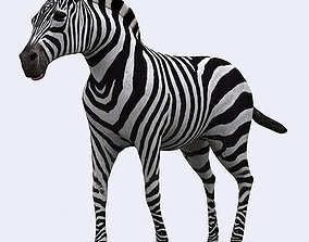 3DRT - Zebra animated