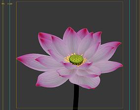 3D model animated lotus Lotus flower