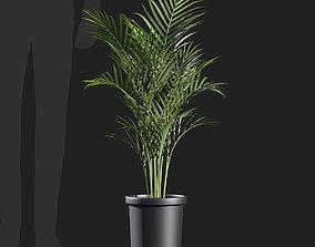 3D Dypsis lutescens Areca palm-01 pot